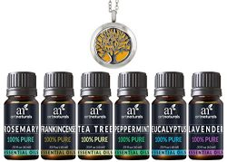 ArtNaturals Aromatherapy Top-6 Essential Oils – (6 x 10ml Bottles) Included Aromatherapy N ...
